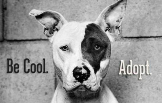 Top_story_86c52187e6ba623d0d78_adopt_a_pet