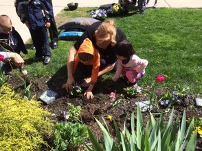 Prekindergarten students use careful hands to plants