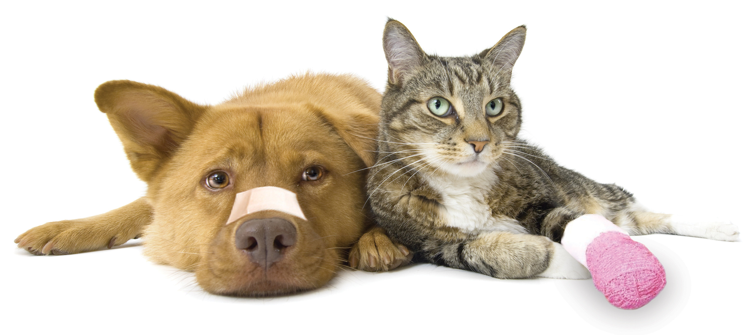 Cpr For Dogs And Cats