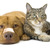 Tiny_thumb_8906d119f8f519c6e632_cat_and_dog_bandages