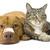 Tiny_thumb_8906d119f8f519c6e632_cat_and_dog_bandages