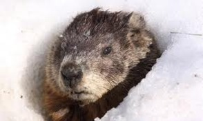 Groundhogs predict six more weeks of winter.