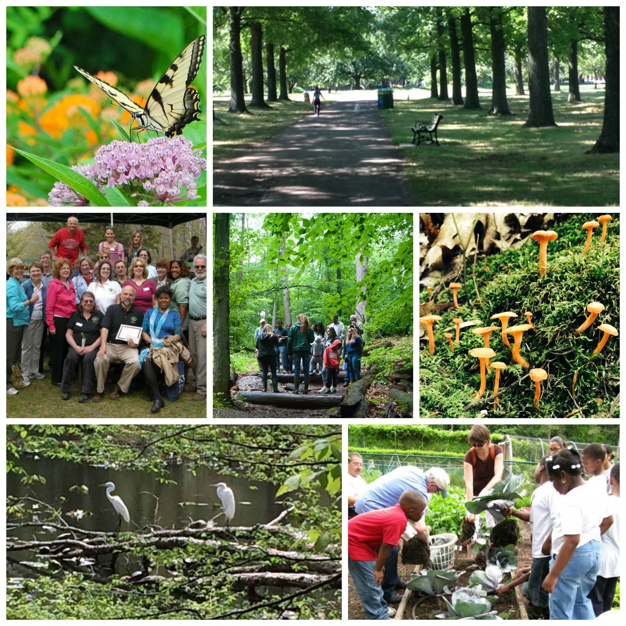 30a9e166381d34b2c091_Go4Life_Senior_Fitness_in_Union_County_Parks__collage_.jpg