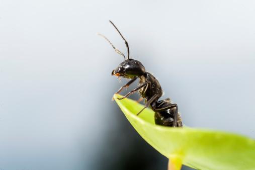 1b5ddc77417456b5cbc6_ants.jpg