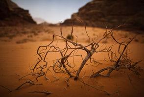 Carousel image 0d6298bf71d2f185dca6 desert