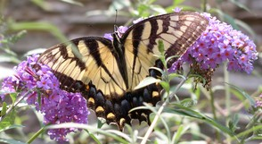 """Butterflies, Beauty, Grace and Drama"" at Trailside Nature & Science Center, May 7, photo 1"