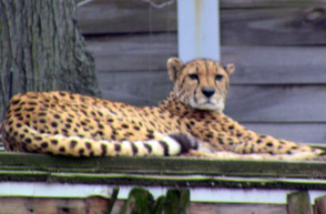Cubs Sleep at the Zoo, photo 4