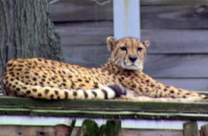 Cubs Sleep at the Zoo, photo 4