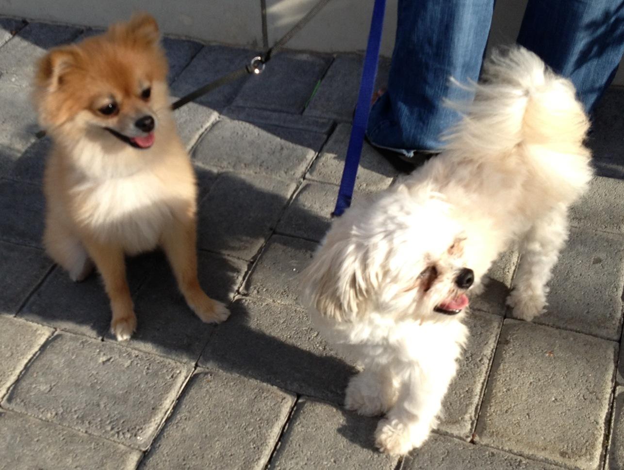 d67fd576532e8563c77d_Dogs.jpg