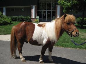 Rebel the Pony