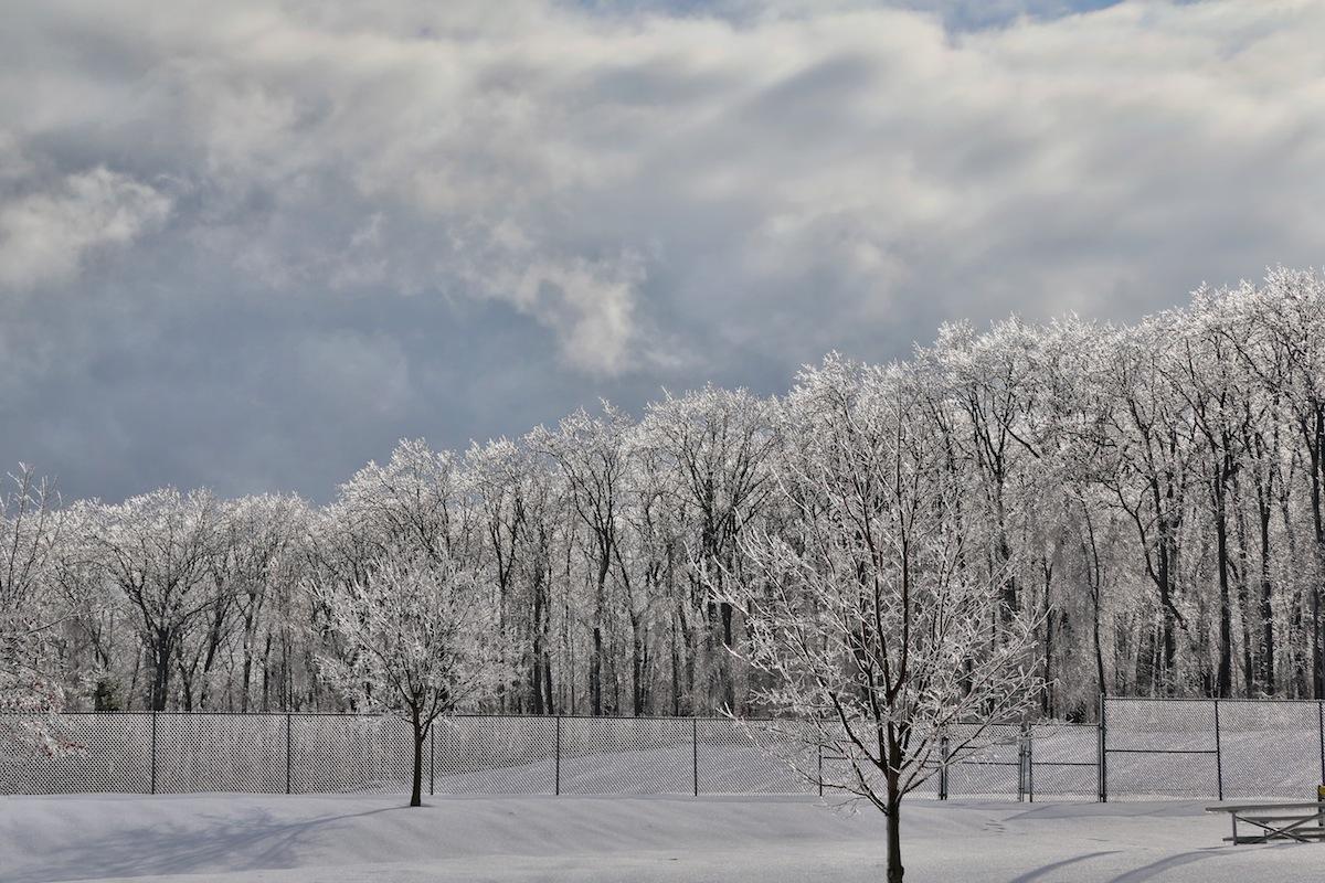 ee199aca8363454e1ea9_trees-snow.jpg