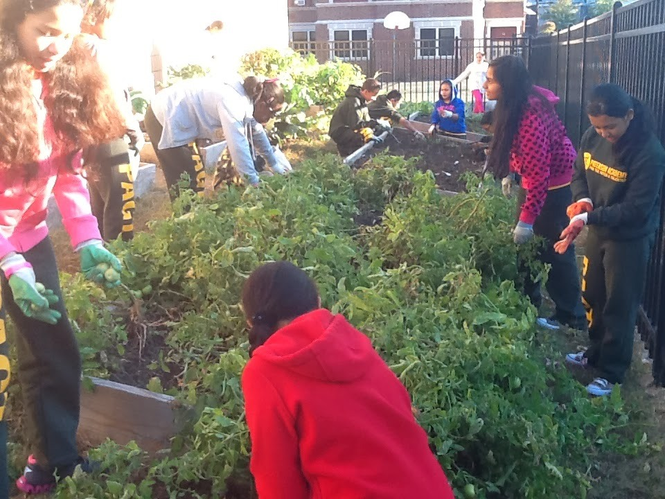 ca641564abf611dc4051_Paterson_students_in_garden__c__Paterson_Staff.JPG
