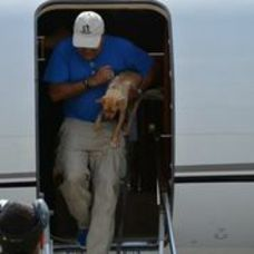 Rescue Dogs Arrive By Jet, photo 5