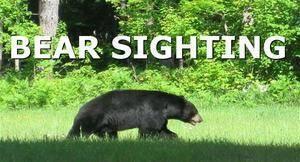 dfec13ca3fc6d8af856b_da476e09841b1e164b03_carousel_image_2616bc7944ffc073d35d_Bear_Sighting_thumb.jpg