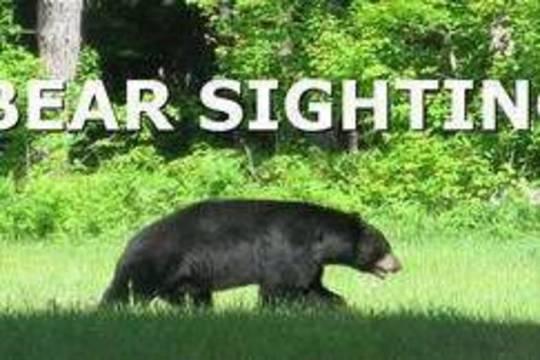 Top_story_dfec13ca3fc6d8af856b_da476e09841b1e164b03_carousel_image_2616bc7944ffc073d35d_bear_sighting_thumb