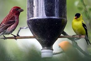 Carousel_image_d38c949628148eef117b_birding