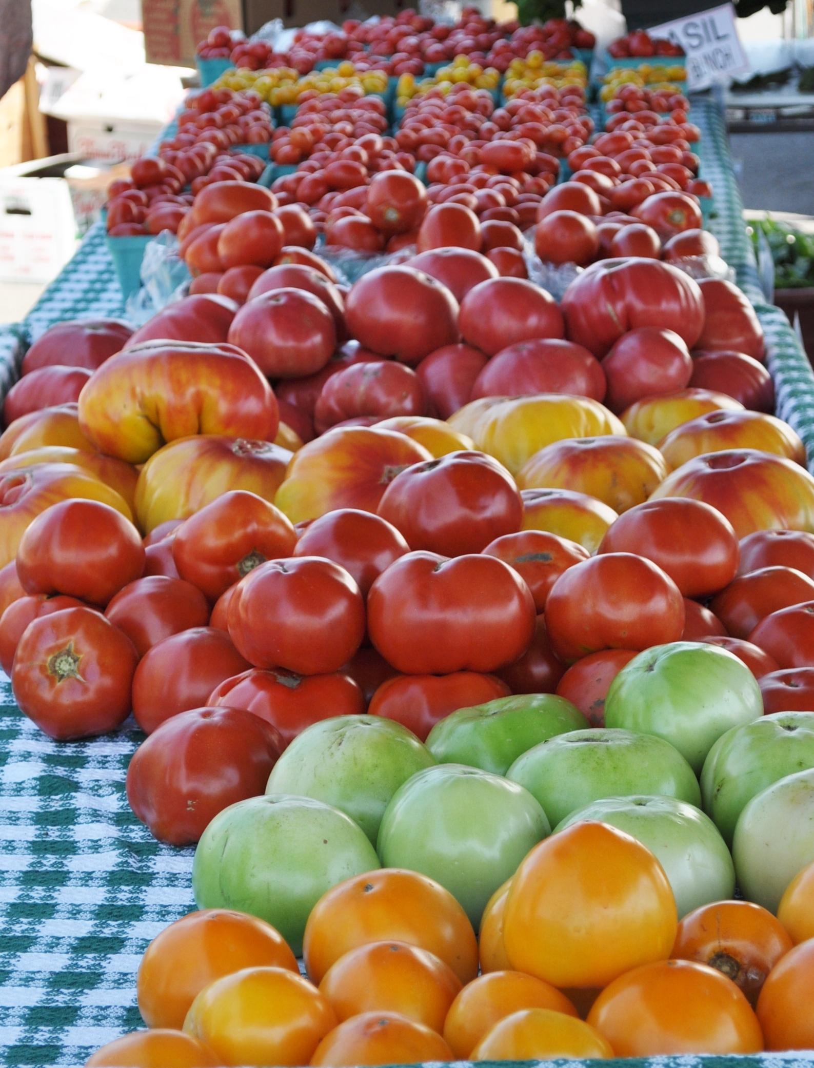 3a31b50b027d7aca0b41_tomatoes.JPG