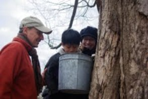 Annual Maple Sugar Fest on Tap at Reeves-Reed Arboretum on Feb. 23 , photo 1