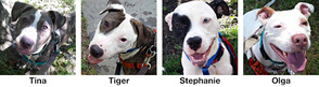 Adorable Doggies Looking for Loving Homes