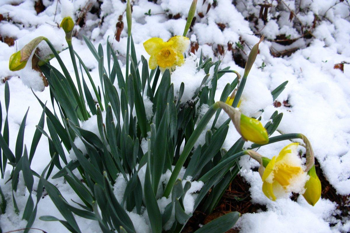 0d39d8cfc5d0074bc24c_snowflowers.jpg