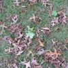 Small_thumb_e9e1b1030193747b6742_leaves2_ts2