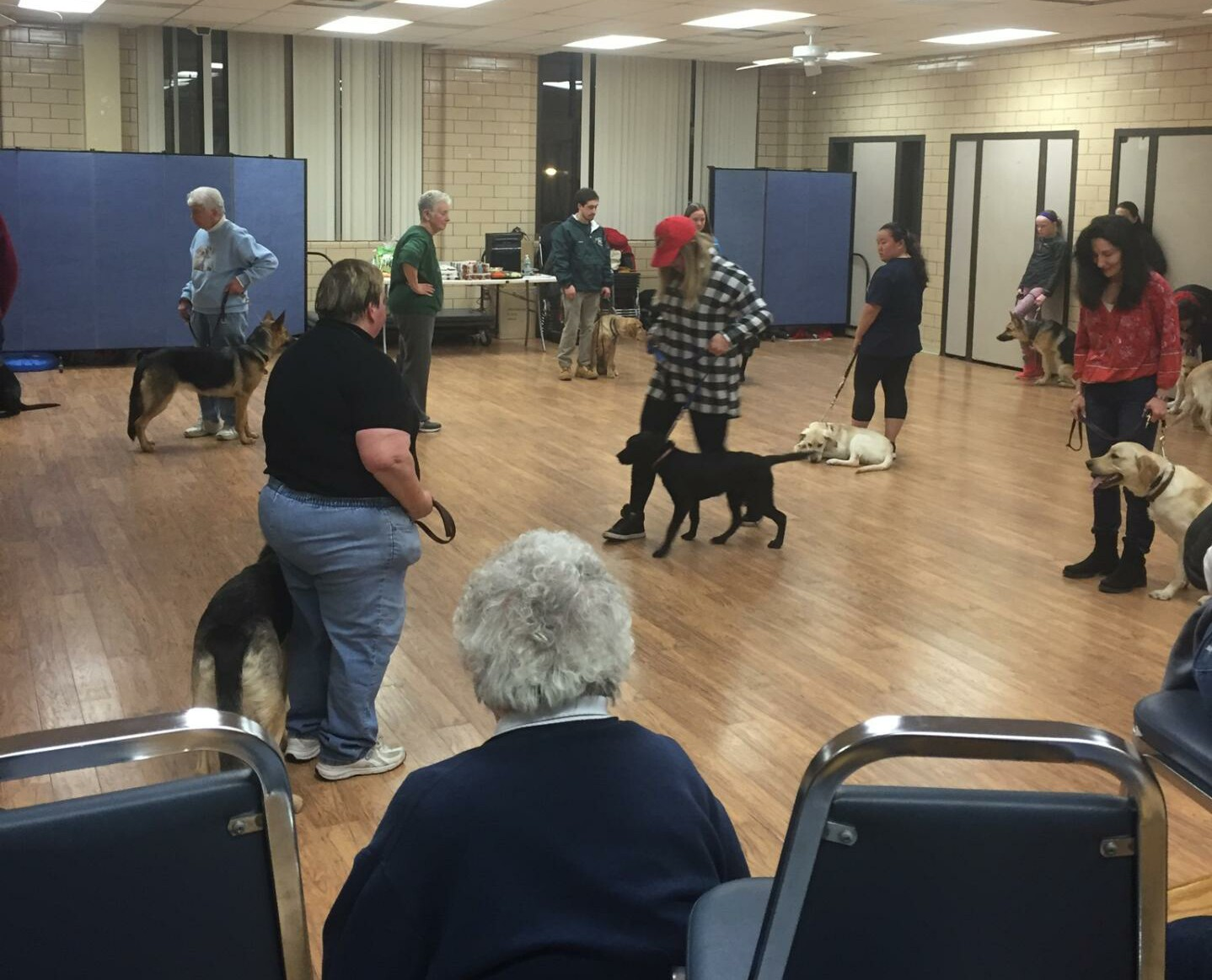 3d17430a7a8aa616696c_Roseland_Borough_Hall_Multipurpose_Room_Dog_Training.jpg