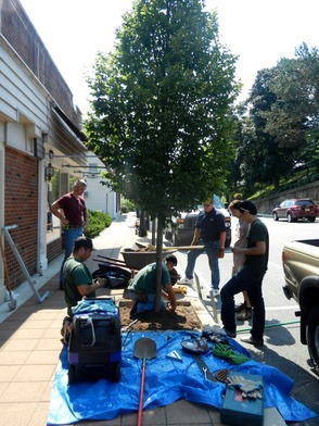 DDC Volunteers Install Tree Grates on Lincoln Place, photo 3