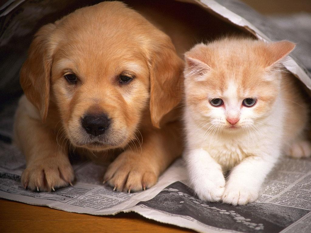 1a25913b68da2824502d_Cats_and_Dogs.jpg