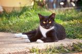Thumb_51e20e07dfe941bf7704_feral_cat_generic