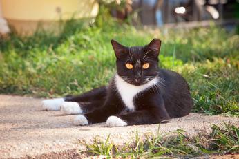 Top_story_51e20e07dfe941bf7704_feral_cat_generic