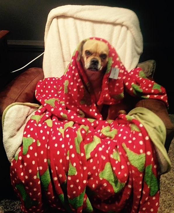 73675aabbeed69f45de1_Josie_is_getting_blankets.jpg