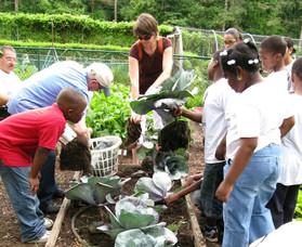 Get Your School Garden Growing