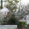 Small_thumb_fb412860bf62cfb3fb77_tree_down