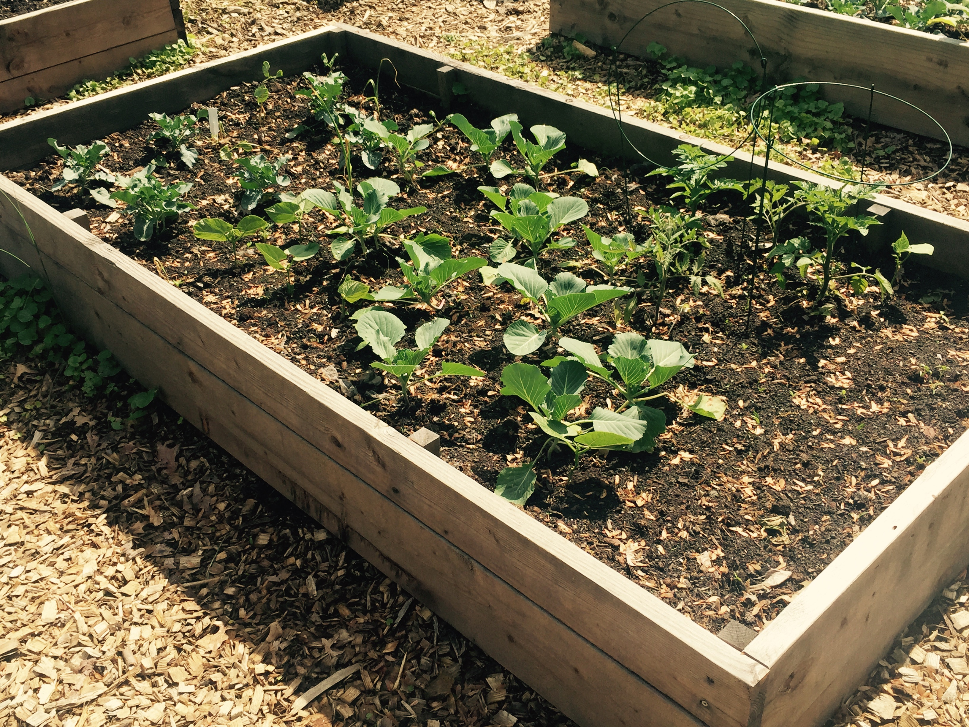 Students Take Part in Work Party for Union Community Garden - Union ...