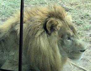 Cubs Sleep at the Zoo, photo 3