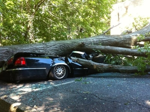 Tree on Car at 7 Kingsbridge