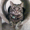 Small_thumb_465de94d94a5c1753319_cat_missing_7-30-14