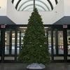 Small_thumb_b7e75b81d0707e4f935b_christmas_tree