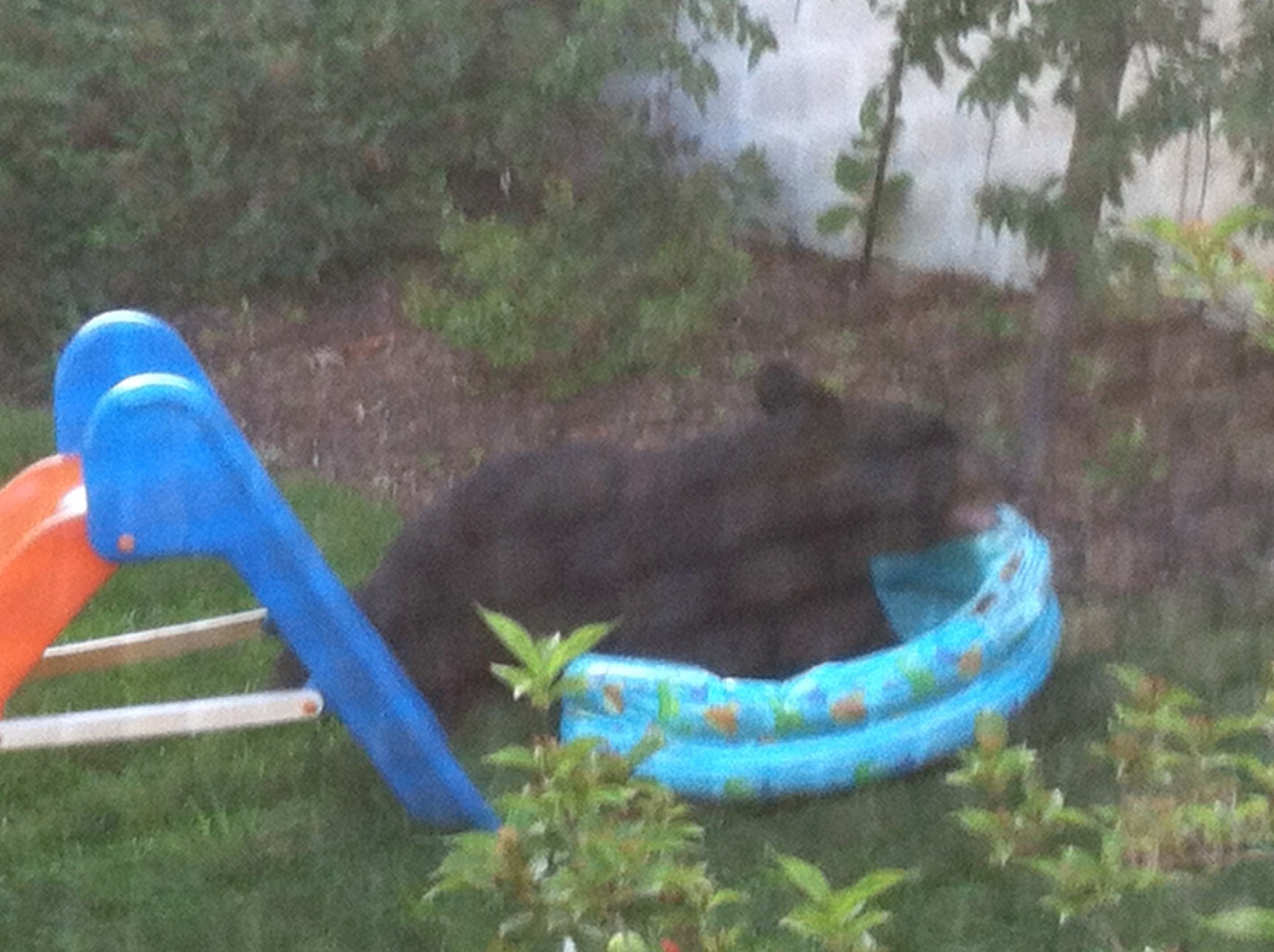 Black bear shows up for breakfast in chatham borough for Pool show new jersey