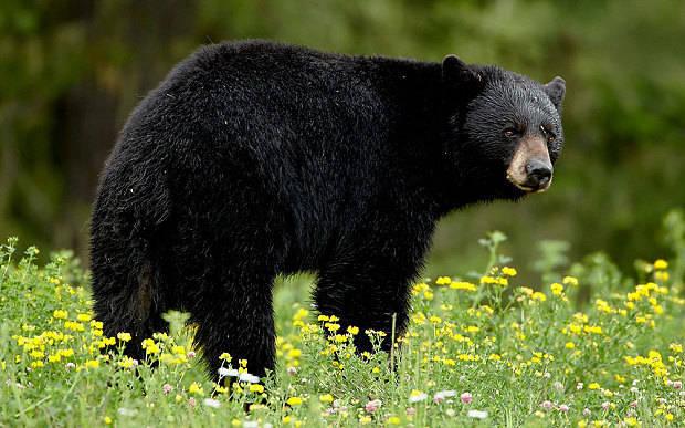 02537686ef42da2388fb_bear.jpg