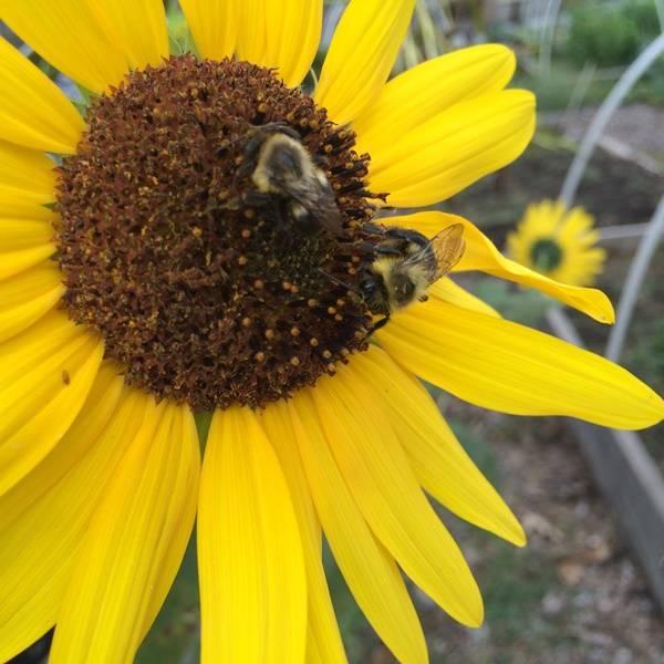 04dd6f8180580a7470f6_Hillside_Pollinators.JPG