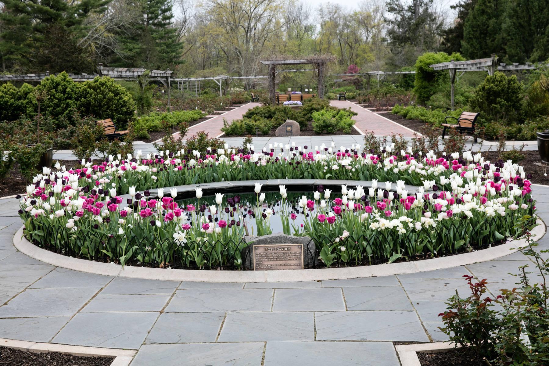 079616ec677e3b7a0c15_Rose_Garden_in_Bloom_copy.jpg