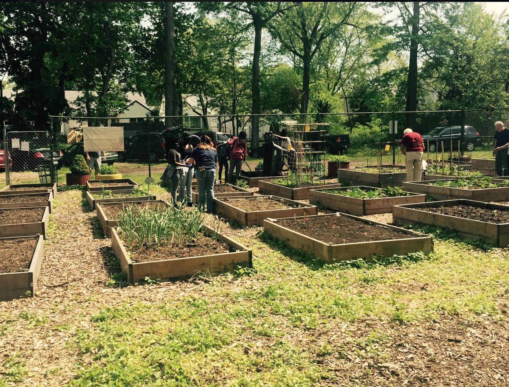 Community Garden Work Party Set For Aug 12 News Tapinto