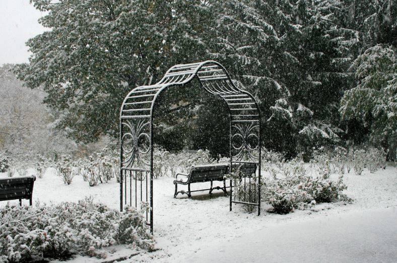 0ec6740d08c6cf273397_Rose_Garden_Snow.JPG