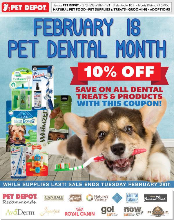 11ba6d99e47785402432_b6701dac055bc1a3713f_Dental_Month_0217.jpg