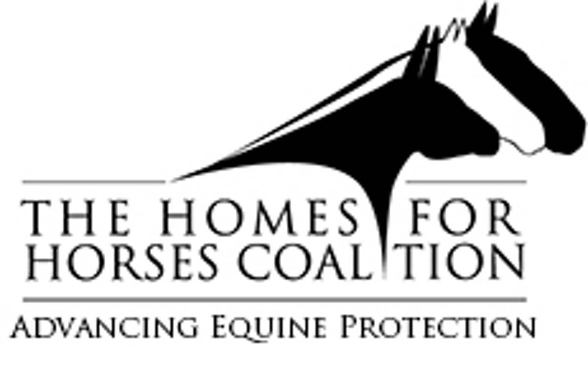 122300a0fd172572251b_homes_for_horses.JPG