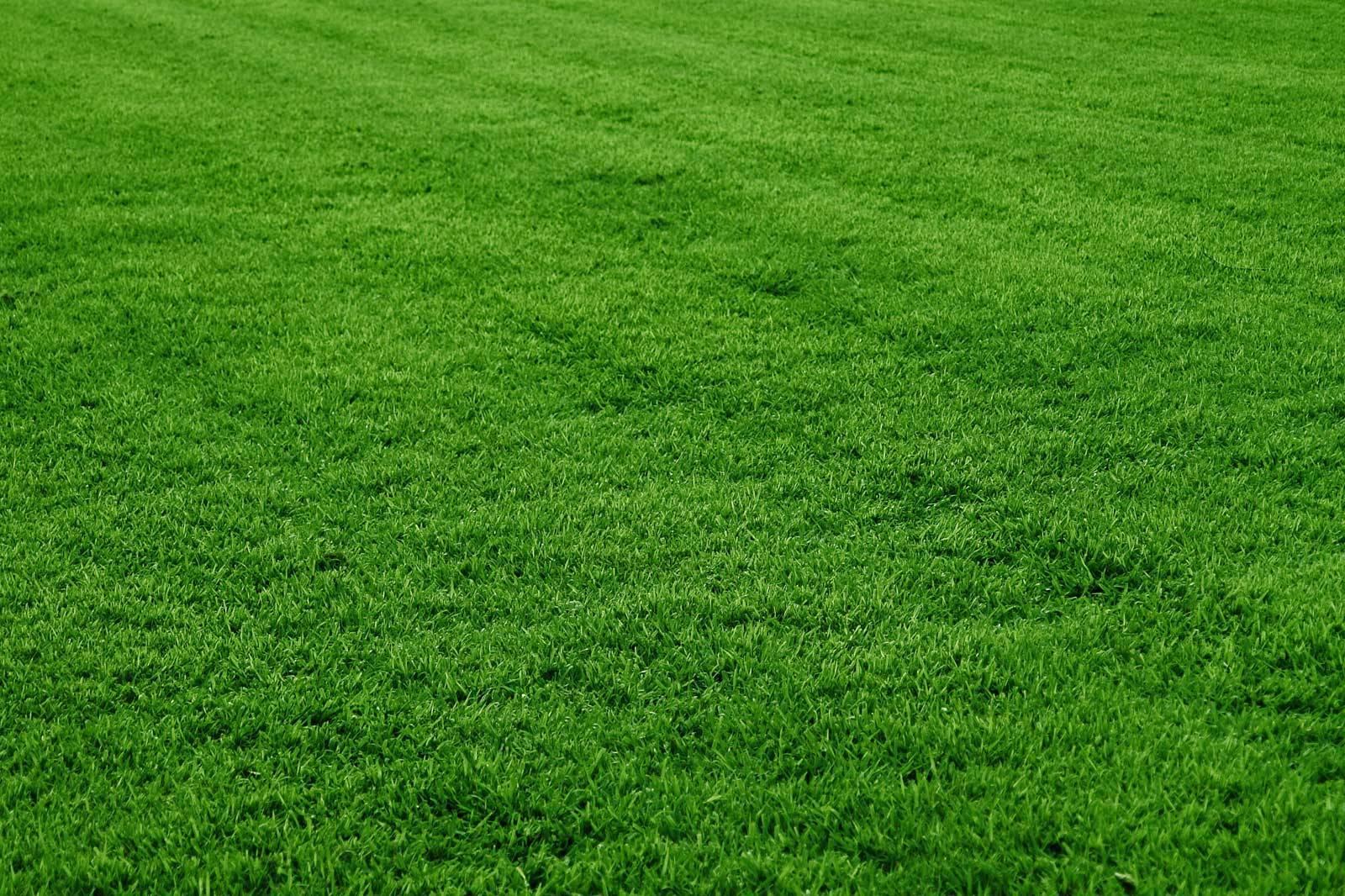 14178d2c601f0cd6e50c_grass.jpg