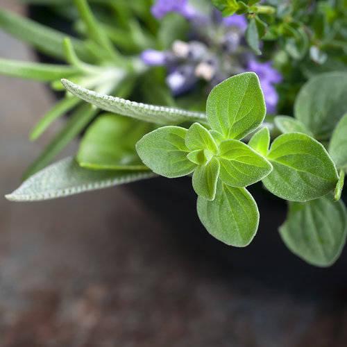 1cda1942b1ff05acb017_fresh-herb-class.jpg