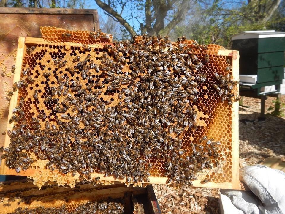 1d134eb9c99d6e04deeb_Bees.jpg