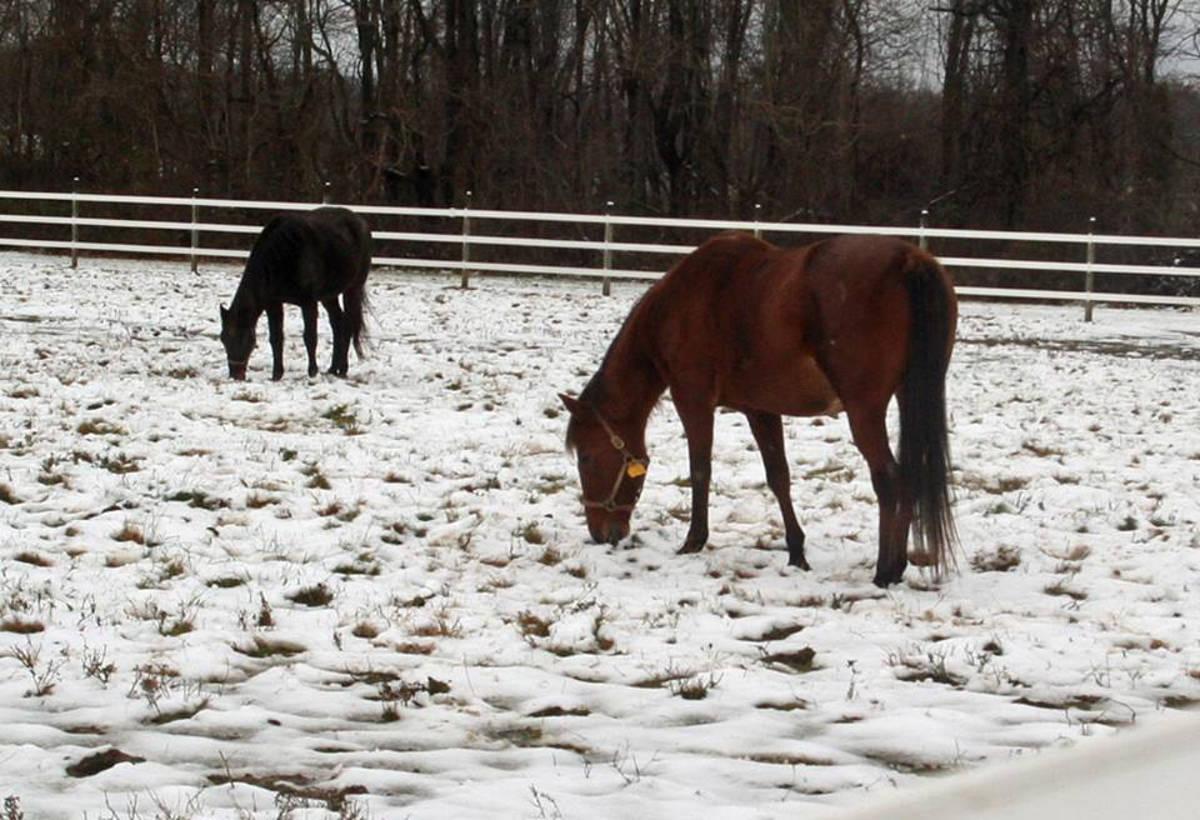 238231c0c7322db14dd3_horses_in_snow.JPG